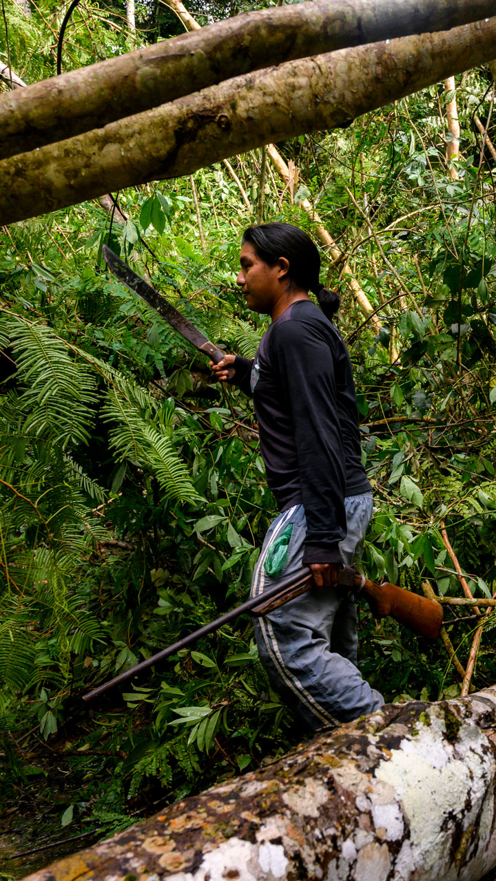 Why Is The Amazon Rain Forest Disappearing Time